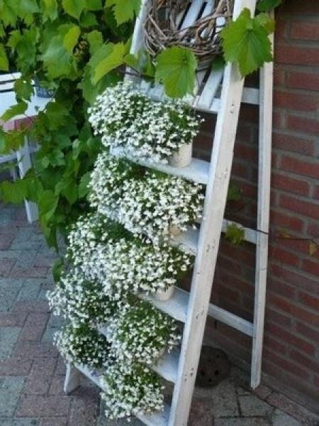 25 beste idee n over tuin ladder op pinterest oude houten ladders clematis latwerk en balkon - Latwerk houten ...
