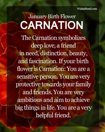 Carnations Are The Birth Flower For January Especially White Carnation Description