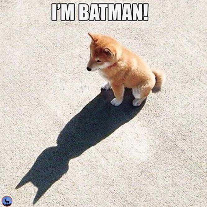 I am #Batman #meme #Corgy