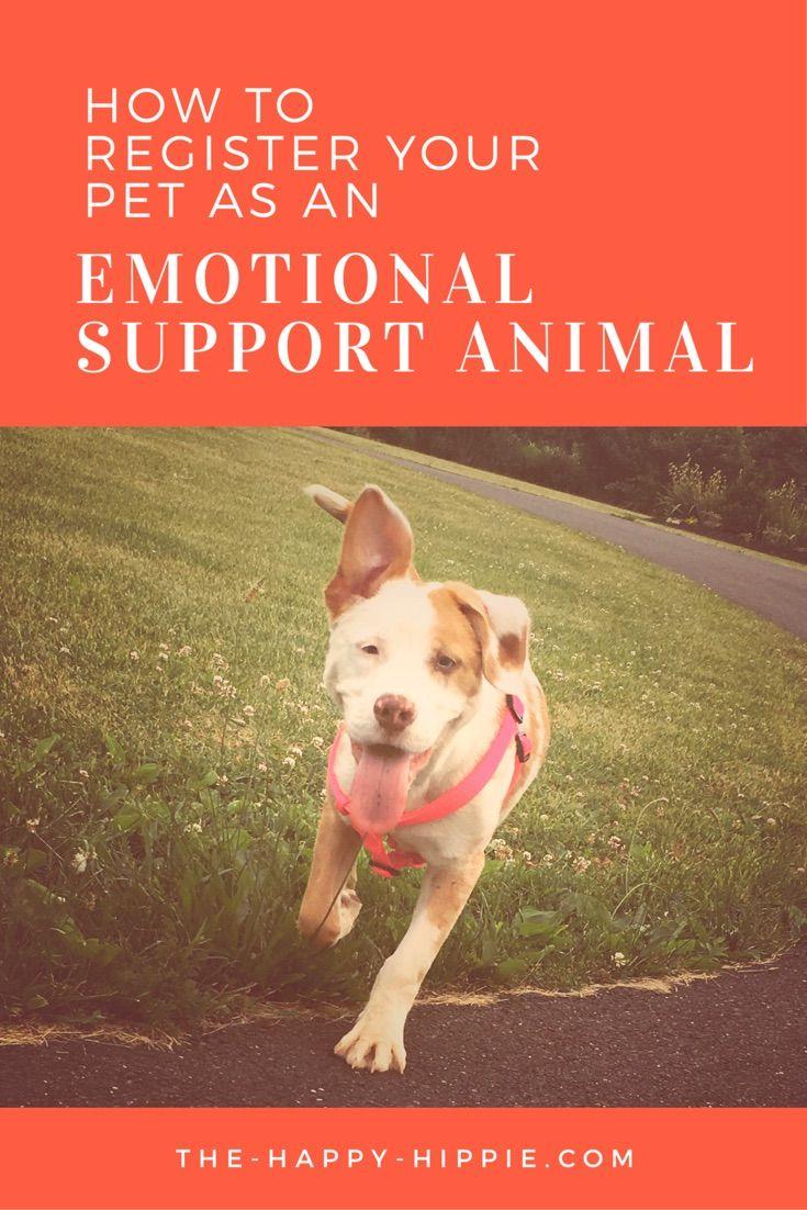 2cff2914823744a10962a781e0d83539 emotional support animal pet life