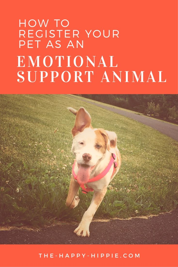 Registering an emotional support animal | Emotional support | Mental Health