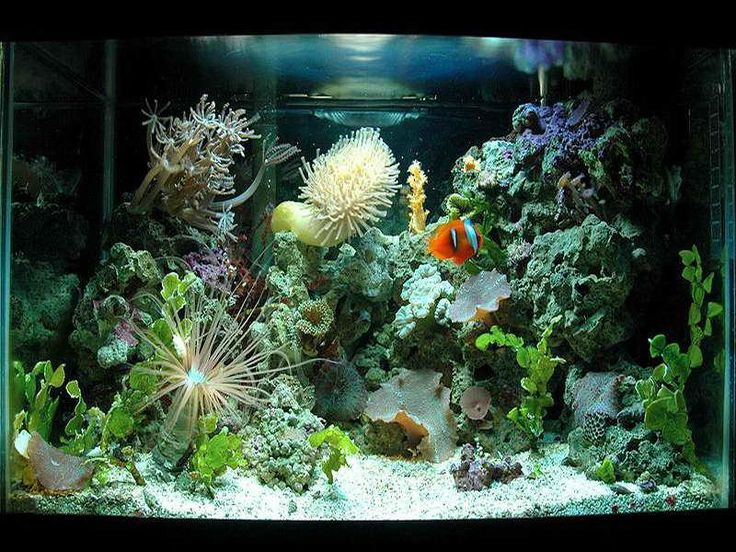 saltwater aquarium design ideas photo