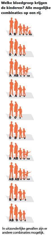 Afbeelding 180x820-bloedgroepen-banner.jpg (180×820) F1 generatie bij kruising #blood_genetics