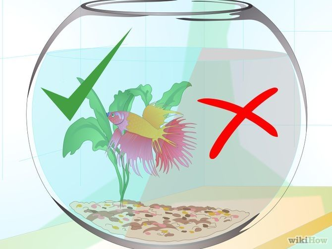 Care for a betta fish in a vase vase betta fish and betta for Care for betta fish
