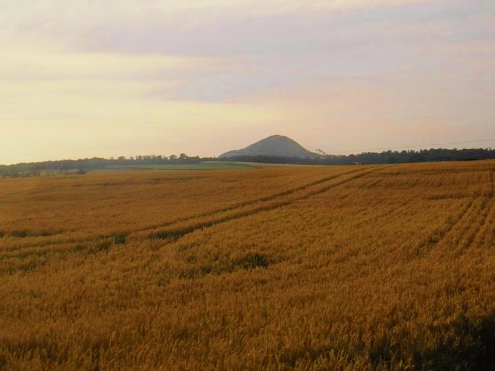 Fields and North Berwick Law, East Lothian