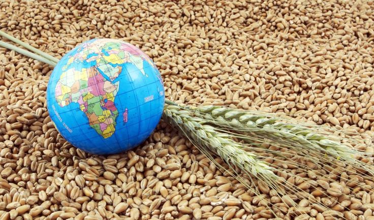 Global Demand For Food Is Rising. Can We Meet It? #sabi #index #directory #fooddemand #foodsecurity http://www.sabusinessindex.co.za/global-demand-for-food-is-rising-can-we-meet-it/