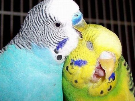 Aaaah...that's the spot! (48 pieces)