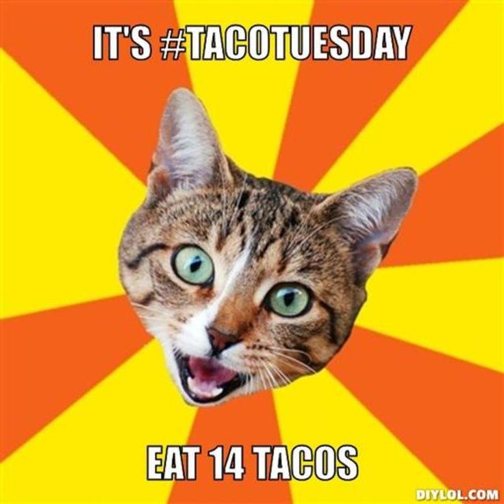 taco cat meme - Google Search