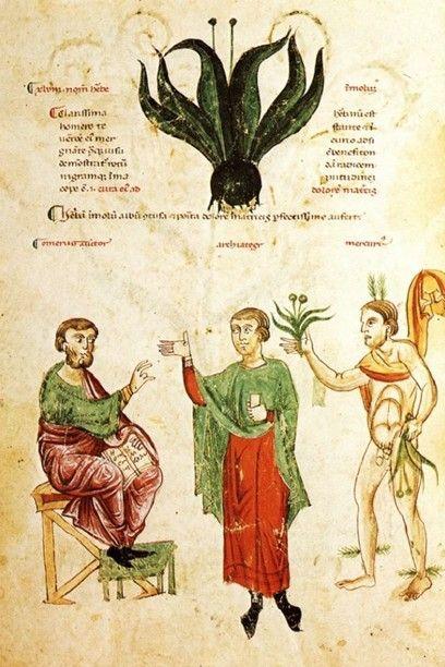 La magica erba moly. Codex Medicina Antiqua (Cod. Vind.93)