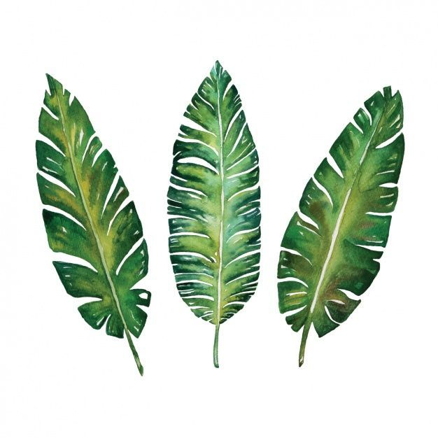 Watercolor Leaves Design Free Vector Design Free Leaves