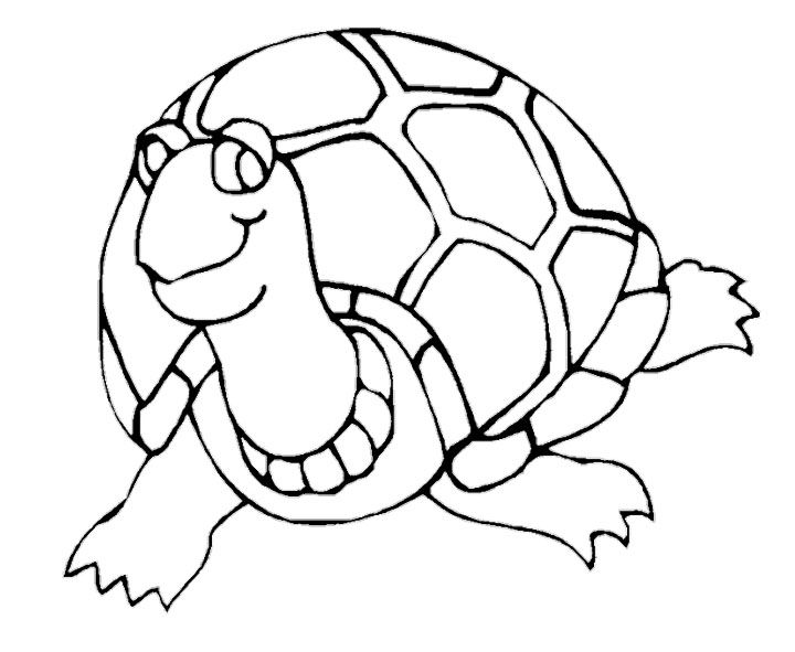 Beautiful Turtle Coloring Pages Turtle coloring pages