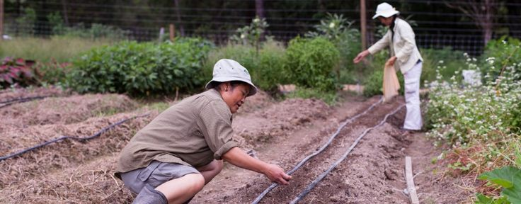 Transplanting Traditions | Connecting Cultures Through Farming and FoodTransplanting Traditions | Connecting Cultures Through Farming and Fo...
