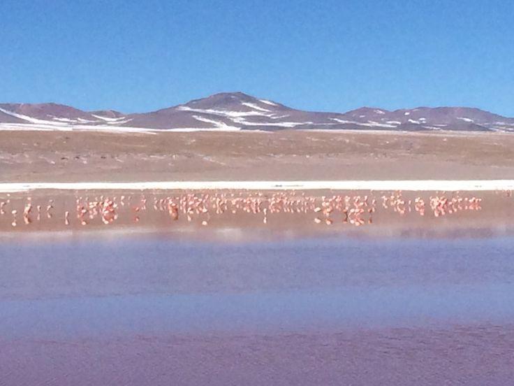 Flamencos rosados en Laguna Colorada, parque nacional Eduardo Avaroa, Bolivia.