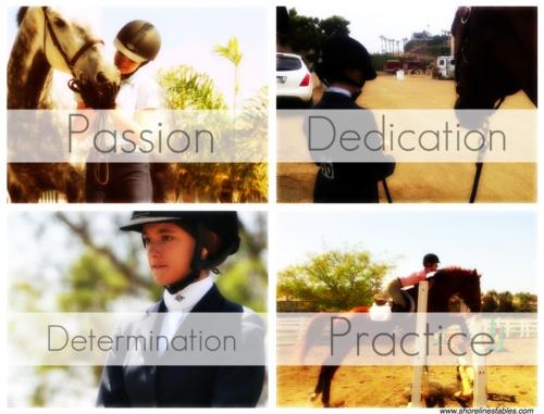 "Horses: ""Passion ~ Dedication ~ Determination ~ Practice"""