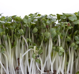 "Broccoli  Rich in antioxidants as well as vitamins A, B and C, broccoli sprouts also have high concentrations of sulforaphane, a cancer-preventing phytochemical. ""Broccoli sprouts really do offer comprehensive nourishment,"" says Snyder, who suggests adding this green superfood to salads and wraps."