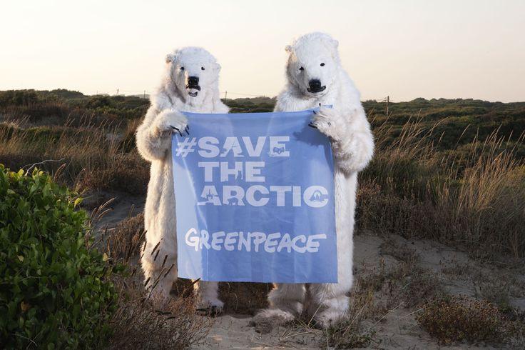 Che ci fanno due orsi polari in spiaggia? Lanciano a tutti l'appello #savethearctic: per fermare i piani di trivellazione di Shell e salvare la loro casa.  Per tenere Shell lontana dall'Artico serve anche il tuo aiuto. Firma su www.SaveTheArctic.org