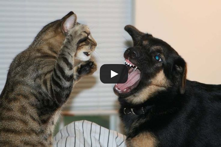 Cat & Dog playing Together Funny Videos - Hybrid News