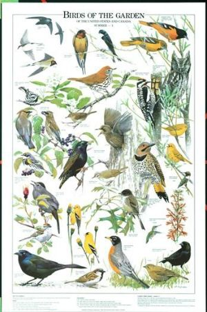 311 best michigan birds images on pinterest bird houses birdhouse birds of the garden summer identification chart publicscrutiny Gallery