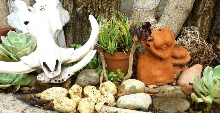 Skulls, succulents and ceramics! I love my garden!