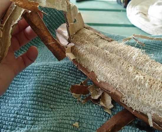 comment fabriquer son éponge à partir de la courge luffa