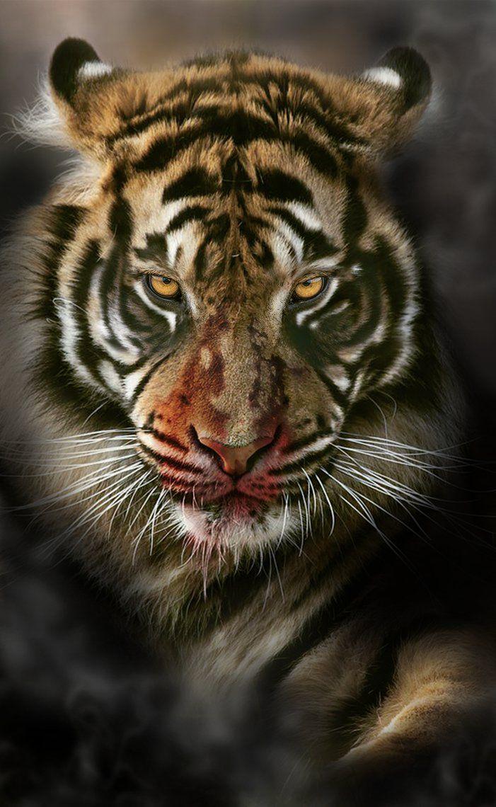 TIGER by LEVIATAN-666.deviantart.com on @DeviantArt