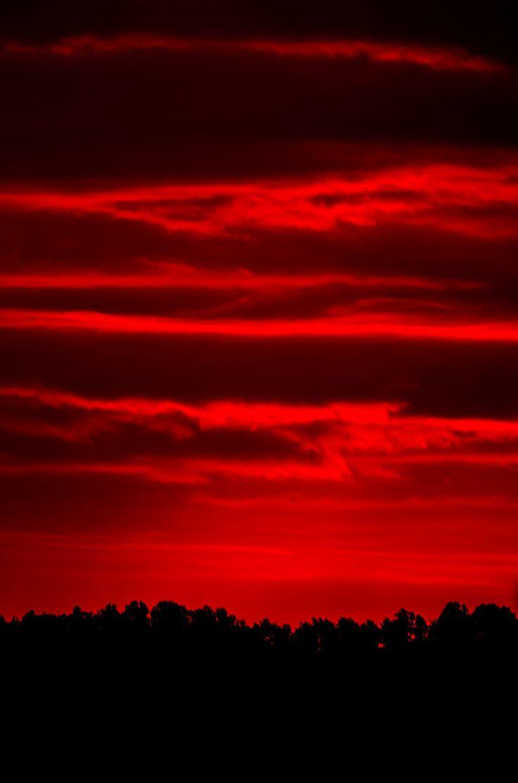 рельеф абсолютно красные картинки базальном слое эпителия