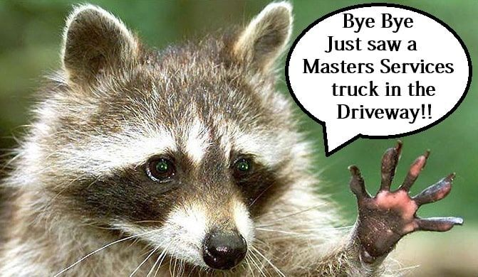 Raccoon Being Caught By Master Services In 2020 Chimney Sweep Vine Memes Master