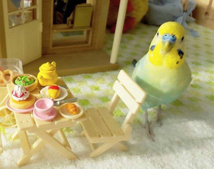 Bist du süß mein kleiner Schatz, und den Tisch hast du auch schon gedeckt. :-)