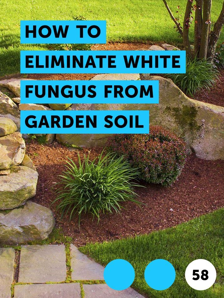 Pin On Pests Weeds Problems