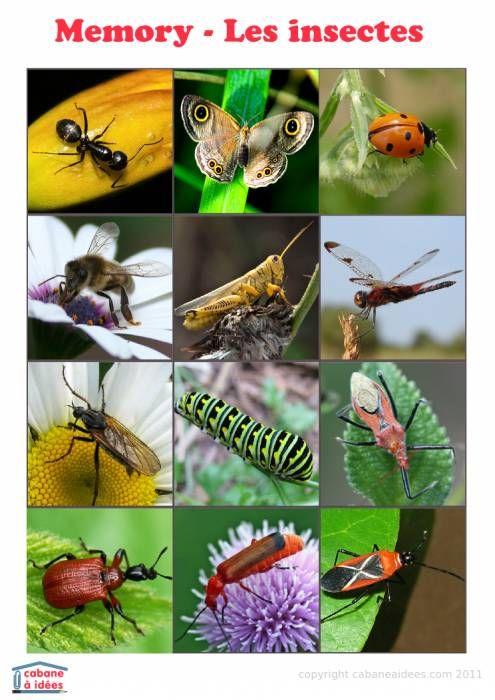 Memory: les insectes | La cabane à idées