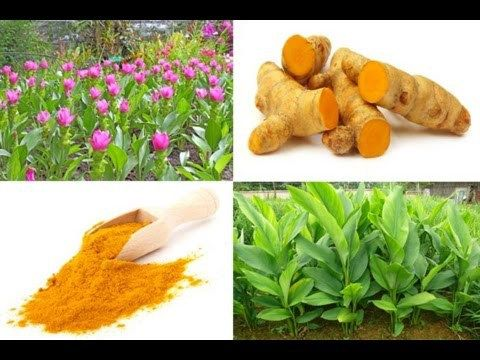 Cùrcuma  Un Regalo de Dios, Para combatir el Cáncer - ✅WATCH VIDEO👉 http://alternativecancer.solutions/curcuma-un-regalo-de-dios-para-combatir-el-cancer/   	  Turmeric and, more specifically, curcumin, its main active ingredient, continues to shine as an imposing anti-cancer 'superfood' spice agent, with a wide range of tangible benefits for health, including its ability to induce the death of cancer cells and prevent cirrhosis. According...