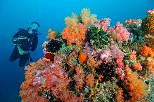 'BELONGAS BAY – CHALLENGING DIVING WITH BIG REWARDS!  #divezone #coralreef #underwater #giliasahan#diving #islandlovers #UnderwaterPhotography #scubadiving #underwaterpics #discoverocean #gopro #letsgosomewhere #ilovediving #goprophotography #travelmore #letsgoeverywhere #beautifuldestinations #ilovesnorkeling #scuba #underwatergallery #gililife #Freediving #underwatersports #wildlife #gili #giliisland #passionpassport #wonderful_places #scubadiving