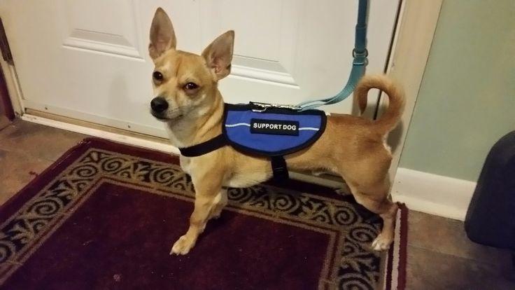 Register your Service Dog and Emotional Support Animal free, Emotional Support Animal letters, service dog vests, service dog id cards and gear.