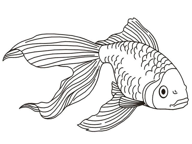 malvorlagen fische meerestiere  aglhk