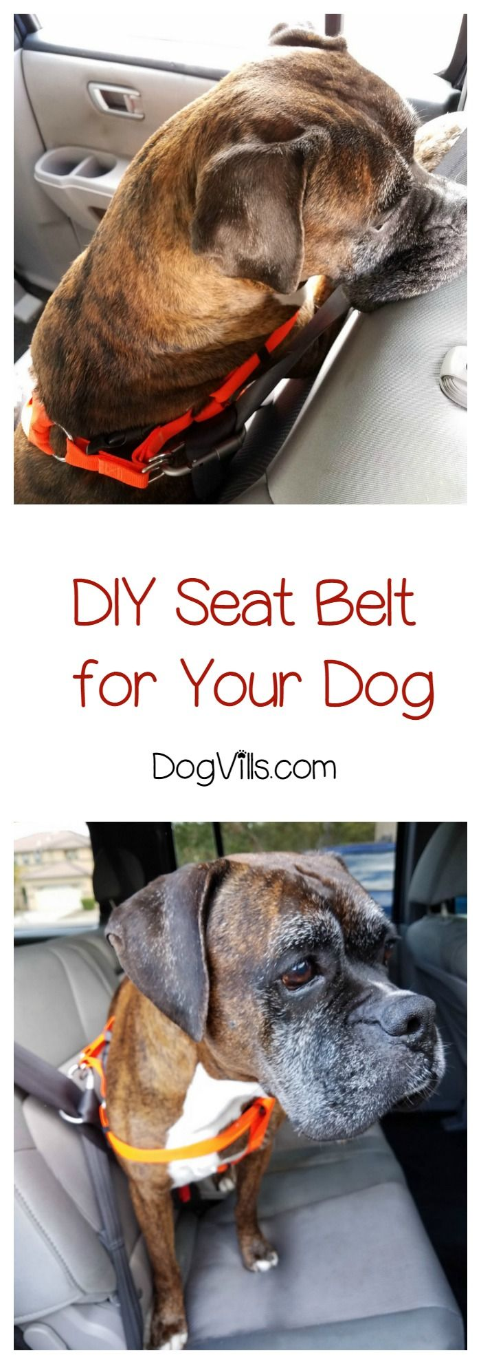 Ever notice that there just aren't enough dog accessories designed to keep Fido safe in the car? We've fixed that with an easy DIY dog seat belt! Check it out!