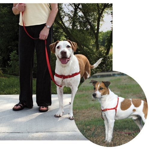 $19.20-$27.50 The Gentle Leader Easy Walk Harness is designed to gently discourage your dog from pulling while walking on a leash. It's so simple - easy to fit and easy to use. There is very little acclimation time or special technique required. Unlike traditional collars, the Gentle Leader Easy Walk Harness never causes coughing, gagging or choking because the chest strap rests low across the br ...