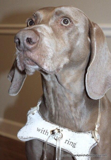 CUSTOM Dog Bone Ring Holder Benefits a No-Kill Animal Sanctuary. $18.95, via Etsy.