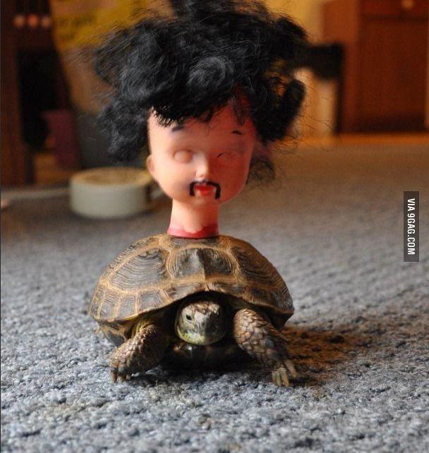 Tortuga Breaking Bad