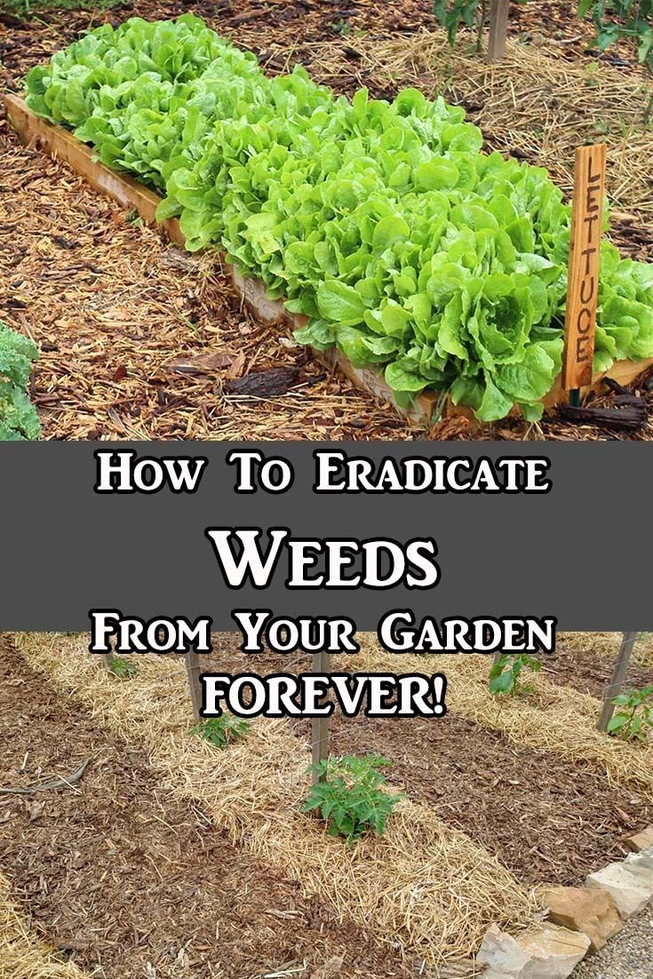 How to eradicate weeds from overtaking your garden easy Vegetable garden weed control