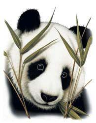 Shirts: Panda Bear