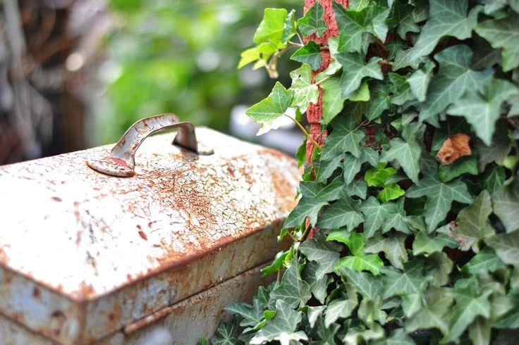 The Garden at Shinola Antiques