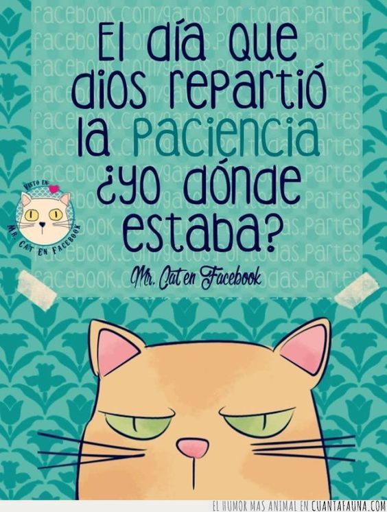 34014 - Las frases de Mr. Cat