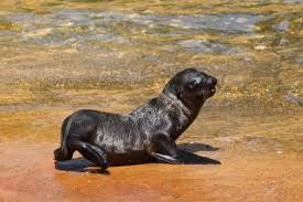 nice seal