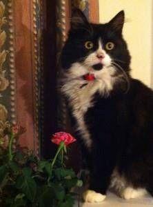 LOST CAT: 28/12/2017 - Bishop's Stortford, Hertfordshire, England, United Kingdom. Ref#: L39804 - #CritterAlert #LostPet #LostCat #MissingCat