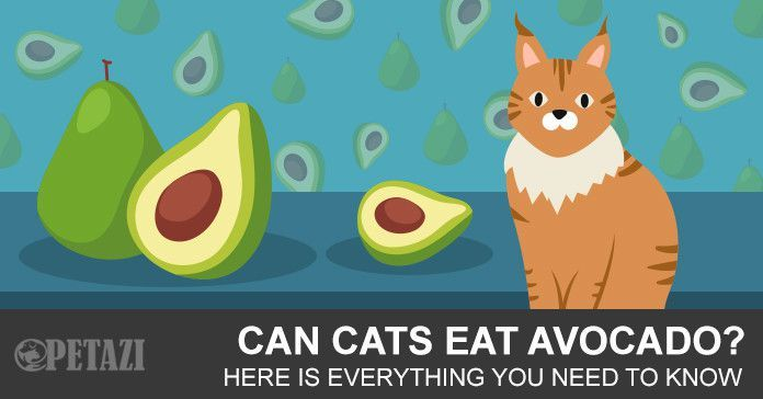 Avocados Can Be A Great Supplemental Food For Our Carnivore Friends Avocado Canning Pet Health