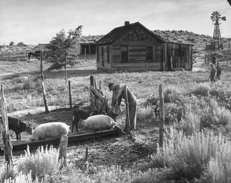 Alfred Eisenstaedt (Tczew, 6 dicembre 1898 – Massachusetts, 24 agosto 1995): John Barnett feeds livestock on his farm, Oklahoma, 1942