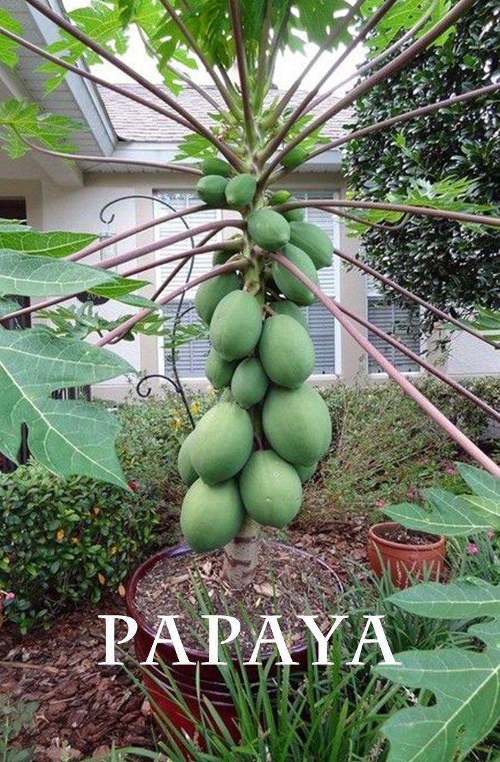 Pin On Amazing Garden Ideas