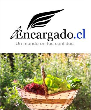 Variedad de lechugas y vegetales de la huerta, Casablanca, Chile