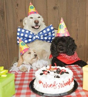 Dog Picture Birthday Cakes