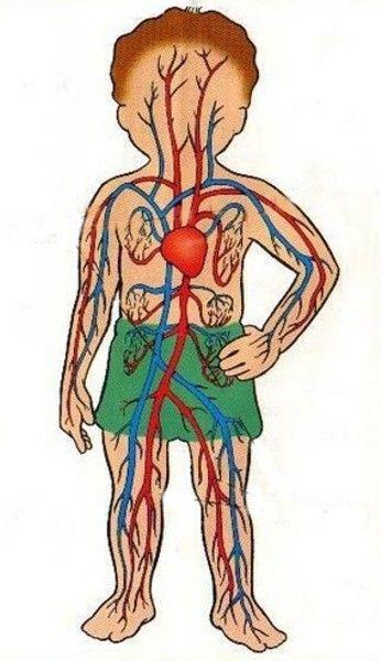 13 best Maquetas de los sistemas digestivos respiratorio ...